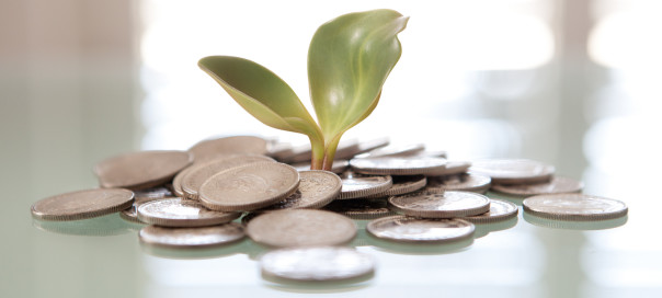 Money Plant, Coins, Plant, Grow
