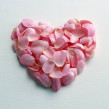 petals, love heart, pink